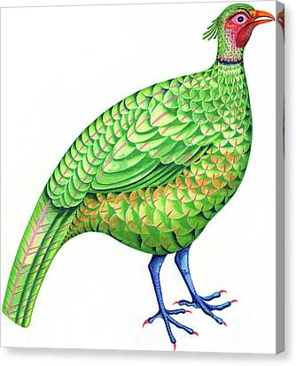 Pheasant Canvas Print by Jane Tattersfield