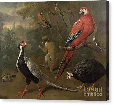 Pheasant Macaw Monkey Parrots And Tortoise  Canvas Print by Charles Collins