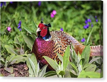 Pheasant Canvas Print by Martin Newman