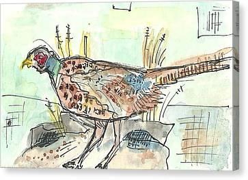 Pheasant Canvas Print by Matt Gaudian