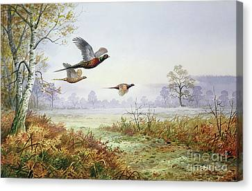 Pheasants In Flight  Canvas Print by Carl Donner