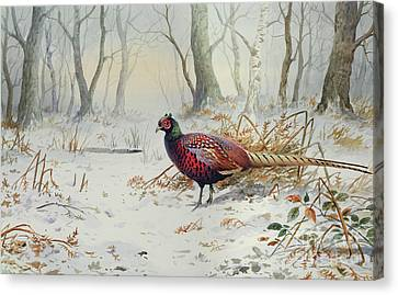 Pheasants In Snow Canvas Print by Carl Donner
