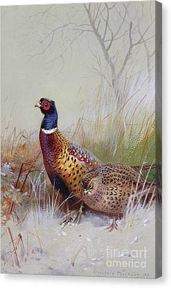 Pheasant Canvas Print - Pheasants In The Snow by Archibald Thorburn