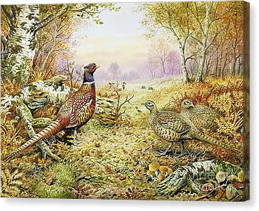 Fall Grass Canvas Print - Pheasants In Woodland by Carl Donner