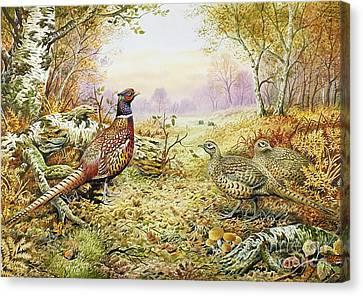 Pheasants In Woodland Canvas Print