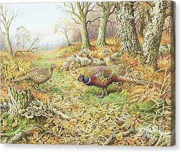 Pheasants With Blue Tits Canvas Print by Carl Donner
