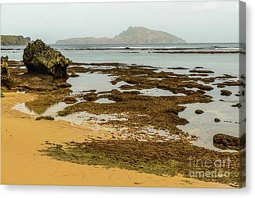 Phillip Island 01 Canvas Print