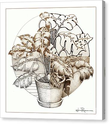 Philodendron 4 Canvas Print by Jim Rehlin