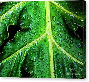 Philodendron Canvas Print - Philodendron Rain by Scott Pellegrin