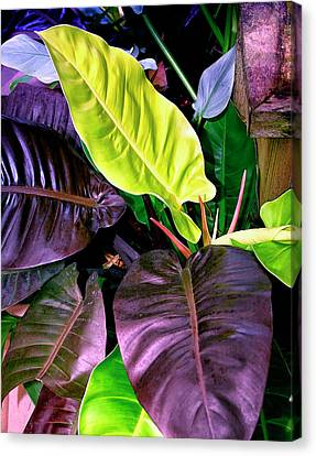 Philodendron Canvas Print - Philodendron by William Dey Dianovsky