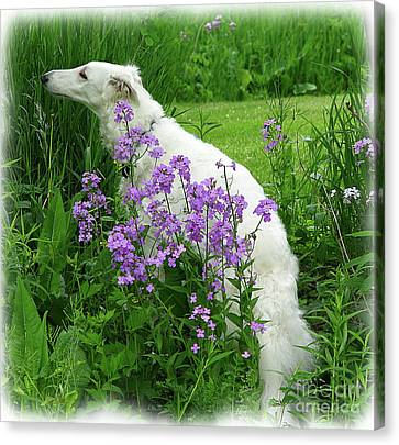 Phlox And Hound Canvas Print
