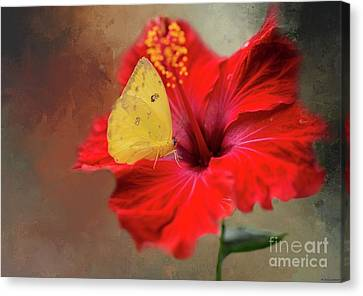 Phoebis Philea On A Hibiscus Canvas Print by Eva Lechner