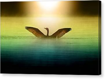Phoenix Rising Canvas Print by Rob Blair