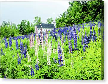 Photographers Dream Or Allergy Nightmare Canvas Print by Greg Fortier