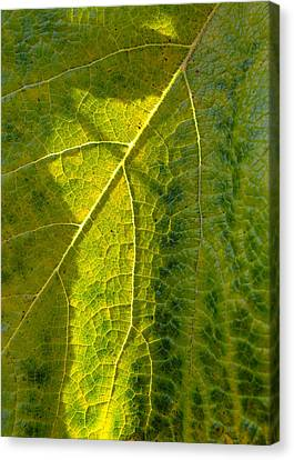 Photosynthesis In Progress Canvas Print by Everett Bowers