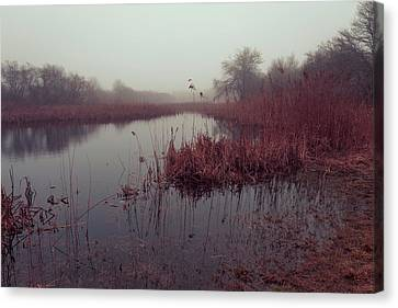 Canvas Print featuring the photograph Phragmites And Fog by Andrew Pacheco