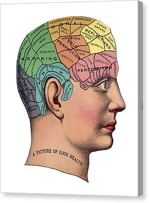 Phrenological Chart Canvas Print