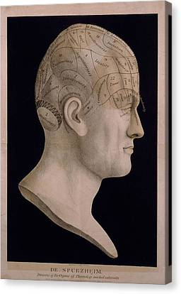 Phrenological Chart Of The Head Showing Canvas Print