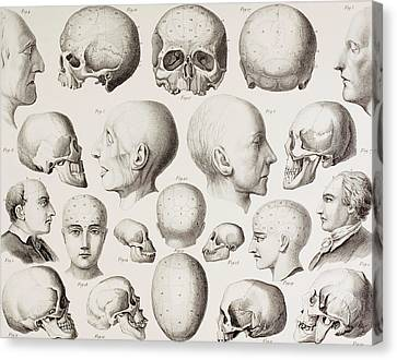 Psychiatric Canvas Print - Phrenological Illustration by English School