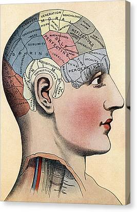 Phrenology Chart Canvas Print by American School