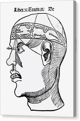 Brain Canvas Print - Phrenology by French School