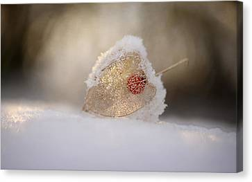 Physalis In Snow Canvas Print by Lotte Gr?nkj?r