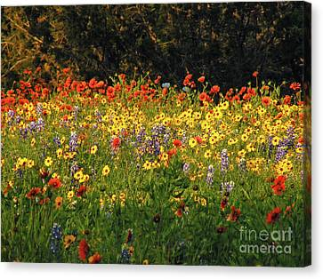 Pick Me Canvas Print