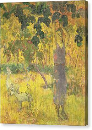 Picking Fruit From A Tree Canvas Print by Paul Gauguin