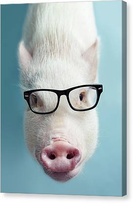 Pickle The Pig I Canvas Print by Eli Warren