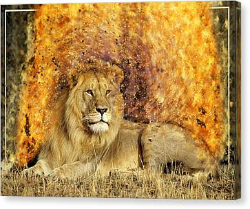 Pieces Of A Lion Canvas Print by Ericamaxine Price