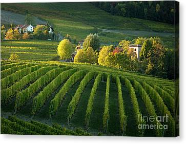 Piemont Vineyard Iv Canvas Print
