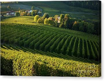 Piemonte Vineyard II Canvas Print