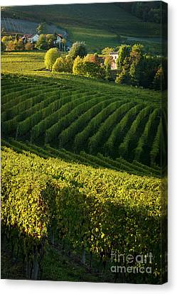 Piemonte Vineyard IIi Canvas Print