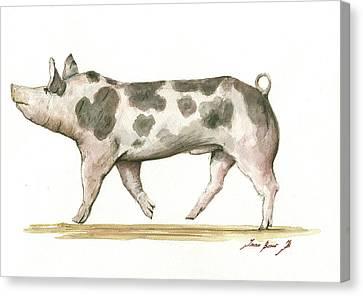 Swine Canvas Print - Pietrain Pig by Juan Bosco