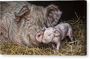 Pig Collection Canvas Print