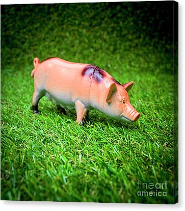 Toy Animals Canvas Print - Pig Figurine by Bernard Jaubert