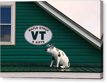 Pig On A Hot Tin Roof Canvas Print by Allen Beatty