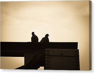 Canvas Print featuring the photograph Pigeon And Steel by Bob Orsillo