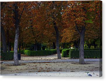 Pigeons Enjoying View Canvas Print by Madeline Ellis