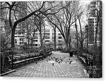Pigeons In Union Square Park Canvas Print by John Rizzuto