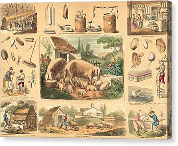 Pigs Canvas Print by French School