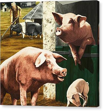 Pigs Canvas Print by Janet Blakeley