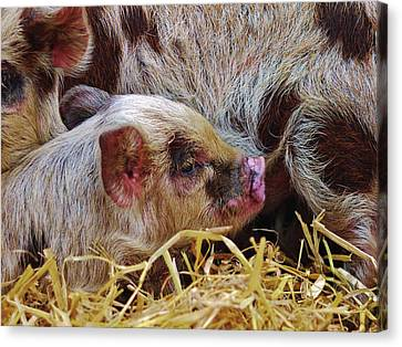 Piglet Canvas Print by Mike Gibbons