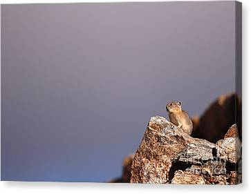 Pika Perched High Among Stormy Skies Canvas Print by Max Allen