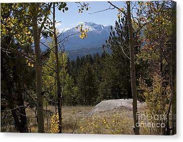 Pikes Peak Framed Aspens Landscape Canvas Print by Marta Alfred