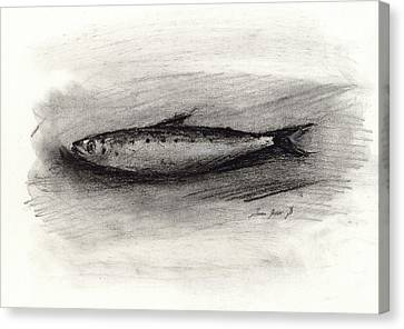 Pilchard Drawing Canvas Print