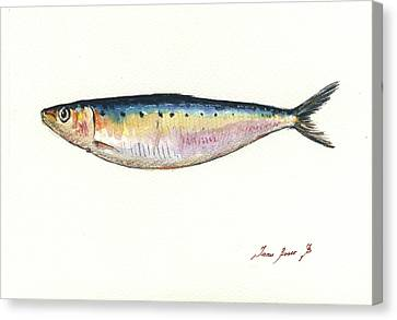 Saltwater Fishing Canvas Print - Pilchard Watercolor by Juan Bosco
