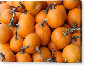 Pile Of Pumkins Canvas Print by Bradford Martin