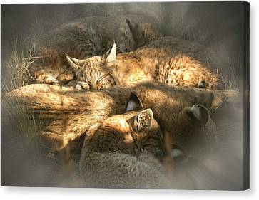 Canvas Print featuring the photograph Pile Of Sleeping Bobcats by Mary Lee Dereske