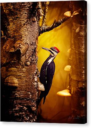 Canvas Print - Pileated Woodpecker Forest Sunrise by Bob Orsillo